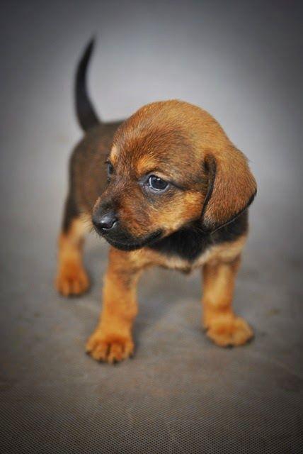 Najświeższy news - ostatni szczeniak ma dom :) #adoptowany #szczeniak #psy #pomoc #schronisko #adopcje #adopt #help #puppy #shelter #dog