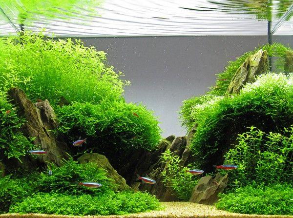 HAC 2014 Galéria - Hungarian Aquascaping Contest HAC 2016