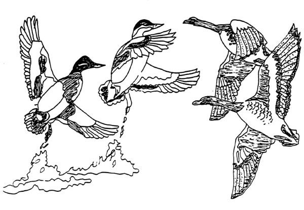 Free wood burning tracing patterns wildlife are