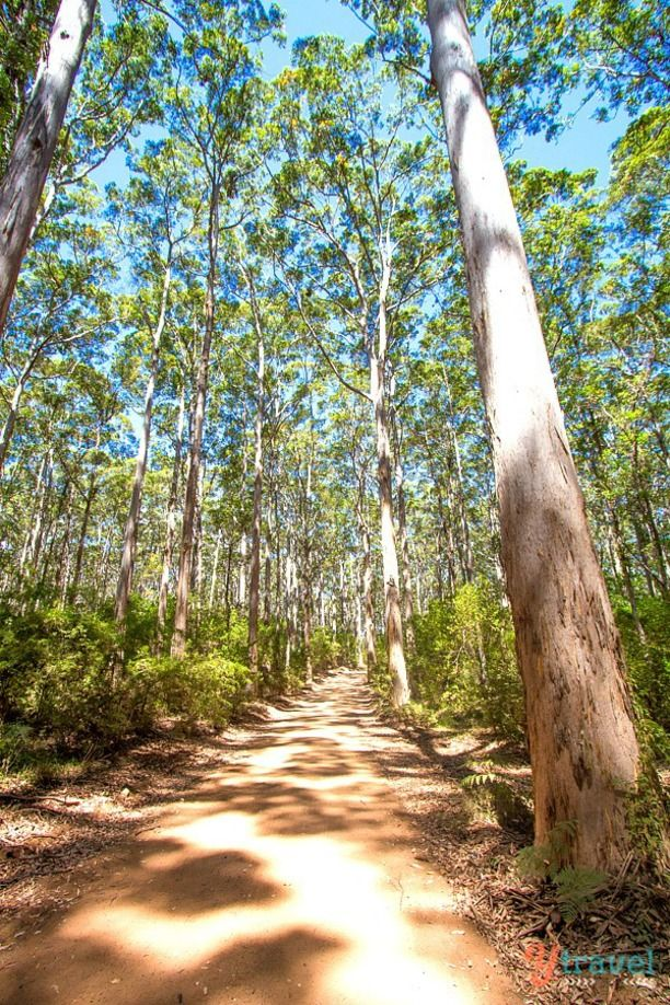 Boranup Forest, Margaret River, Western Australia - my property is not far from here.