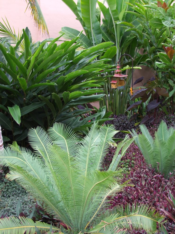 Dioon edule, Tradescantia, Ginger, Colocasia and Heliconia. Botany Landscaping and Garden Consultancy.