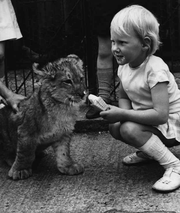 Hayley Mills (the actress from the original Parent Trap ) chillin' with some ice cream and a lion cub in 1957.