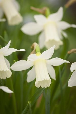 458 best march wedding flowers in season uk spring inspiration see our seasonal flowers board for a full list mightylinksfo