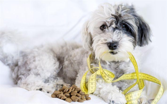 herunterladen hintergrundbild cairn terrier kleiner weisser hund hunderassen maband niedliche tiere - Ideen Fr Kleine Hinterhfe Mit Hunden