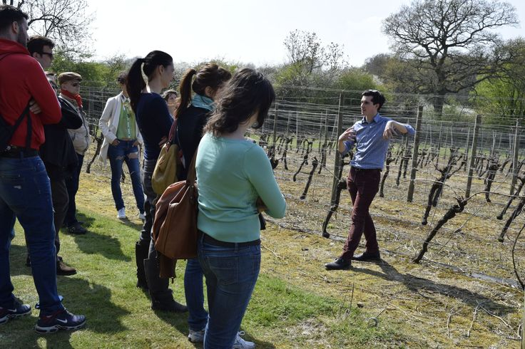 Tom from Ridgeview explaining about the vines