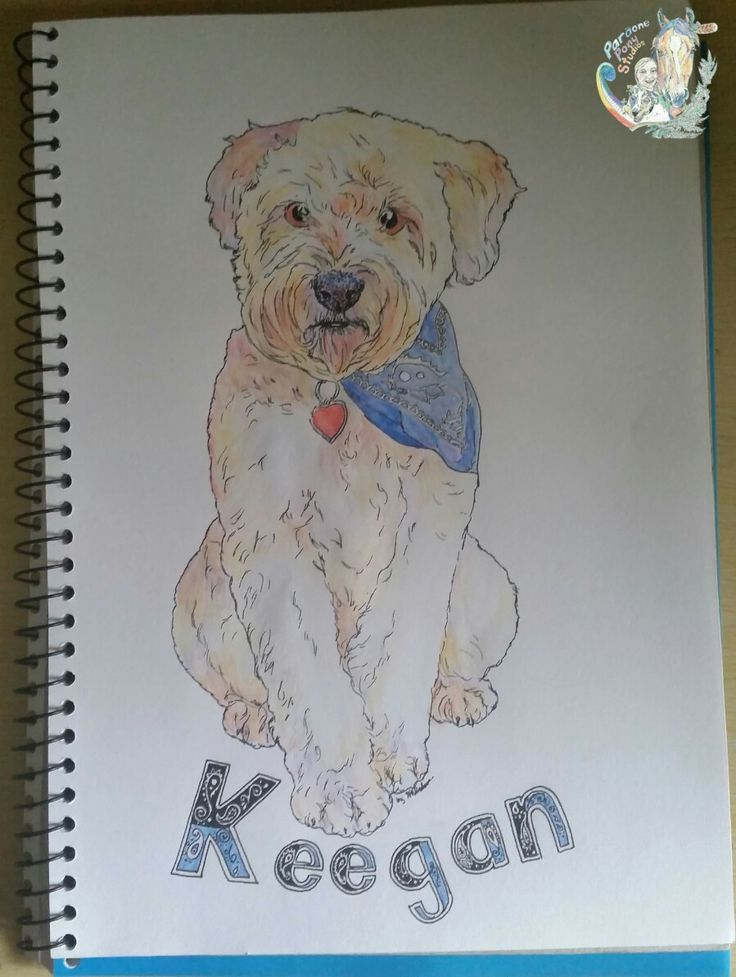 2016 Quick Commission. 2nd commission and 2nd Wheaten terrier. Watercolour pencil and artist pitt pen on A4 sketch paper. Hypercolour.