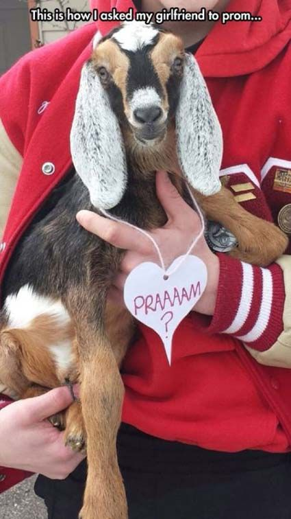 promposal goat.  OMG I would have said yes and ran off with the goat.  LOVE IT. haha