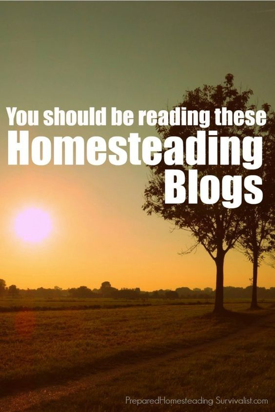 You should be reading these homesteading blogs. Sometimes it can be a real challenge to get good, solid information online. These are our favorite homesteading blogs. | Prepared Homesteading Survivalist