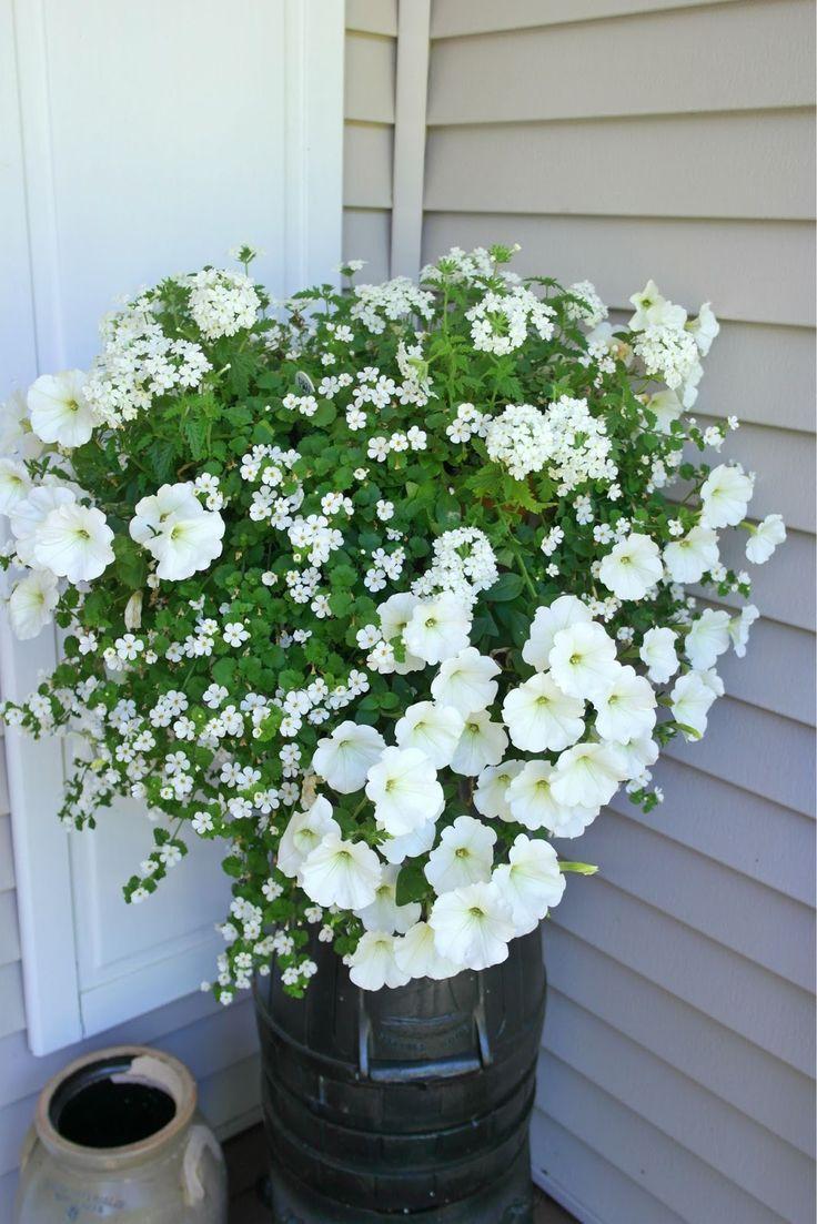 white verbena, petunias & bacopa ~ Folded Gingham