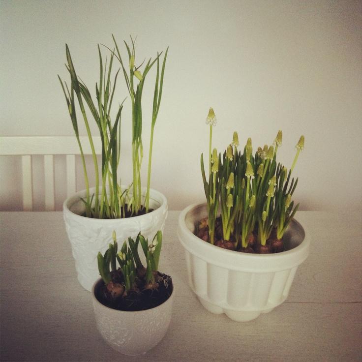 Springtime Flowerpot
