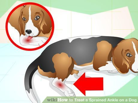 How to Treat a Sprained Ankle on a Dog: 9 Steps (with Pictures)
