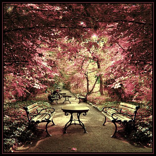 park in the springCherries Blossoms, Spaces, Secret Gardens, Favorite Places, Dreams, Beautiful, Trees, Pink, Pretty