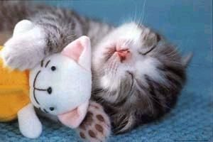 sweet kitty, good night, dobranoc