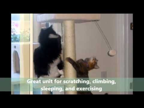 Pet Products Online | Armarkat B5701 Classic Cat Tree | PetProductsOnline - YouTube | Click http://PetProductsOnline.info/go/armarkat57inchcattreeinivory/ to BUY the Armarkat B5701 57-Inch Cat Tree In Ivory.  OR  Click http://petproductsonline.info/customer-reviews-of-the-armarkat-classic-cat-tree-b5701 for Customer Reviews.