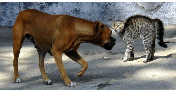 Koira ja kissa varuillaan