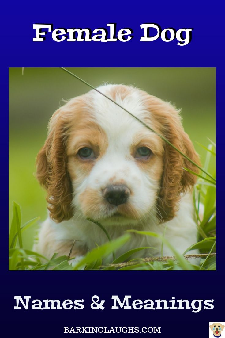 Female Dog Names And Meanings Girl Dog Names Puppies Names
