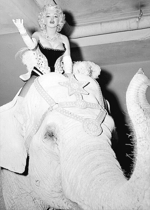 Ed Feingersh - Marilyn Monroe - March 30, 1955 - opening night of the Ringling…