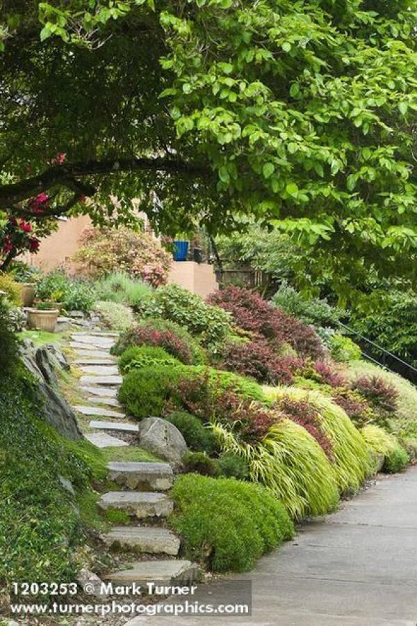 40 Awesome Garden Landscaping Ideas Slope And Tips In 2020 Sloped Garden Evergreen Landscape Landscaping A Slope