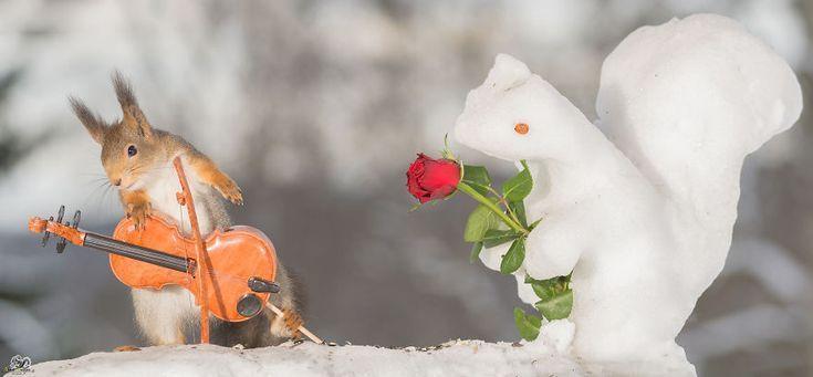 Ich schieße Eichhörnchen mit kleinen Musikinstrumenten durch meine … – Hartmann Hartma   – Deutch | Sosyal Penguin