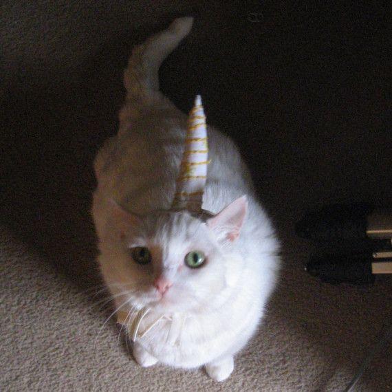 Unicorn costume for cat. Yay! @Tamara Walker Daughhetee Ehrlich   Lilly would LOVE this!