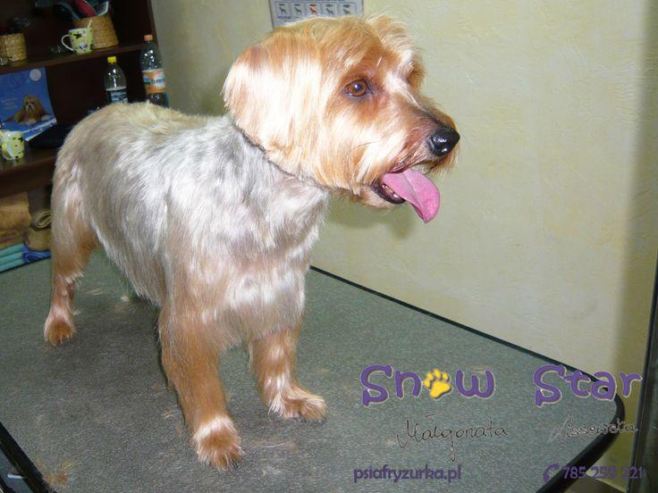 Badi - Psi Fryzjer Snow Star on Psi Fryzjer Toruń - Salon Psiej Urody Snow Star w Toruniu  http://psiafryzurka.pl/social-gallery/badi