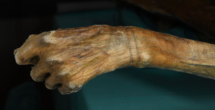 It's official: Ötzi the Iceman has the oldest tattoos in the world - Redorbit