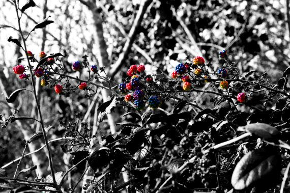 Limited Edition 8x10 Signed Print  'Berries'. by thelongwayround