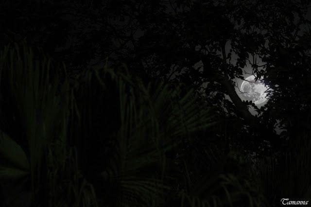 Tamanna S: #moon #love #romantic #beauty #night #nature