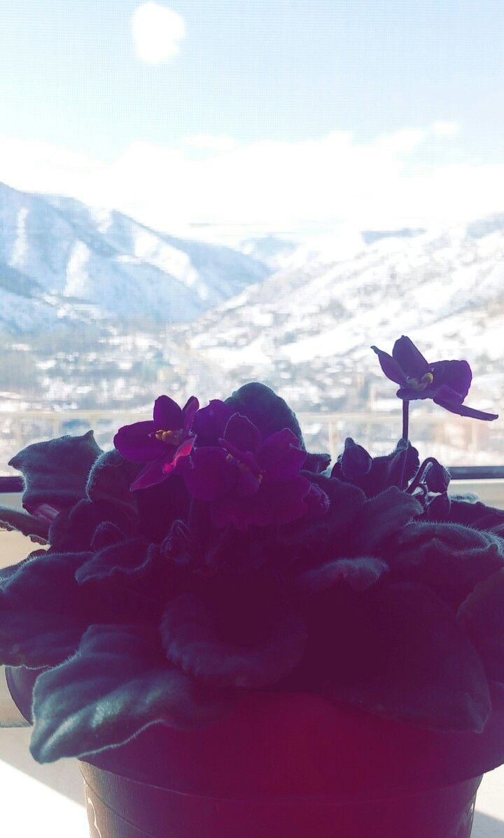 Mountains..Violet..