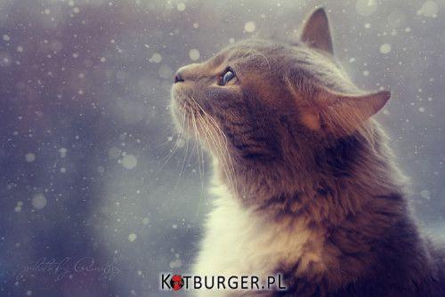 Podziwiając płatki śniegu –