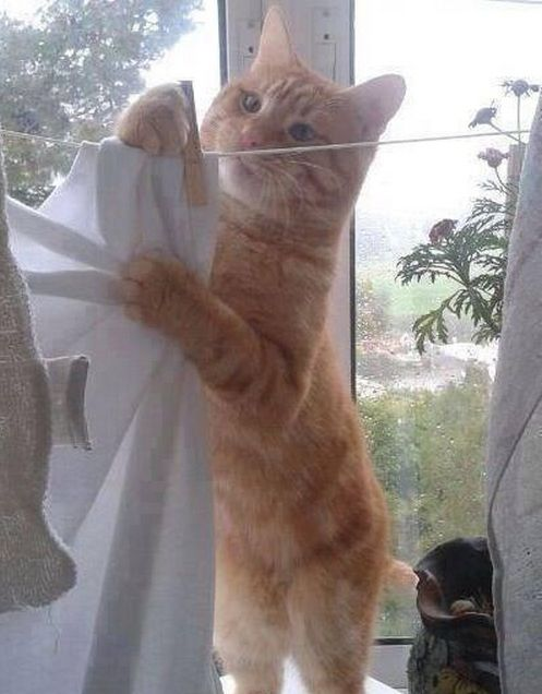 """I Love Housework! Said no one ever…"" Kitty doing housework, so adorable:-)"