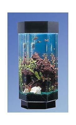 1000 ideas about hexagon fish tank on pinterest acrylic for 15 gallon fish tank