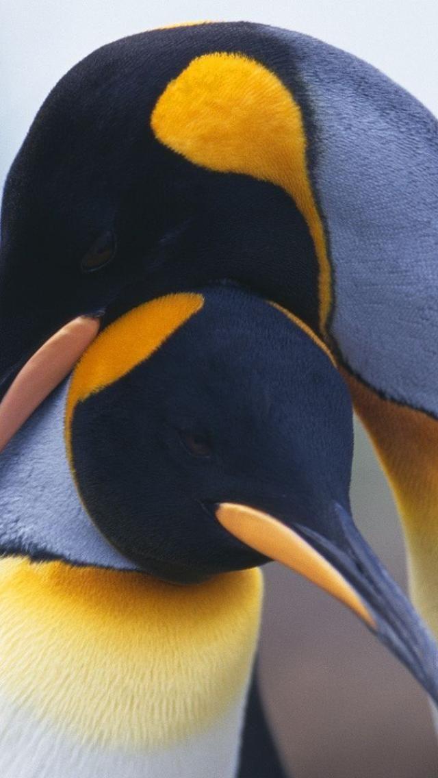Foundwalls Wallpapers 2012 06 Penguin