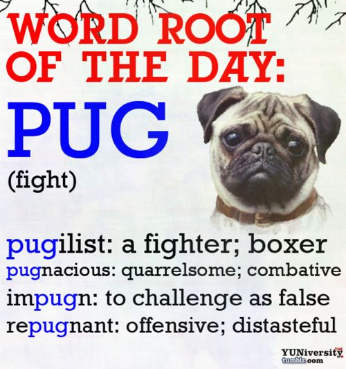 Word Roots: And you thought pugs were gentle creatures?! Another very helpful word root to know!