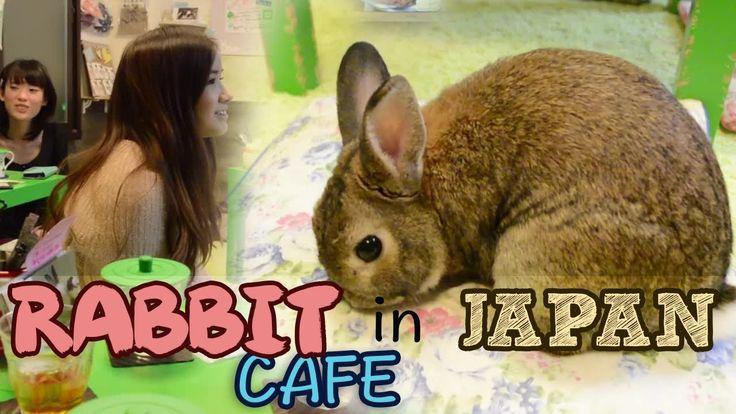 Kim Dao visits a rabbit / bunny cafe in Harajuku, Tokyo!