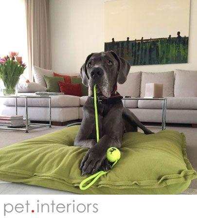 Bestes Hundebett für Doggen. Überragende Qualität, orthopädische Latexfüllung.