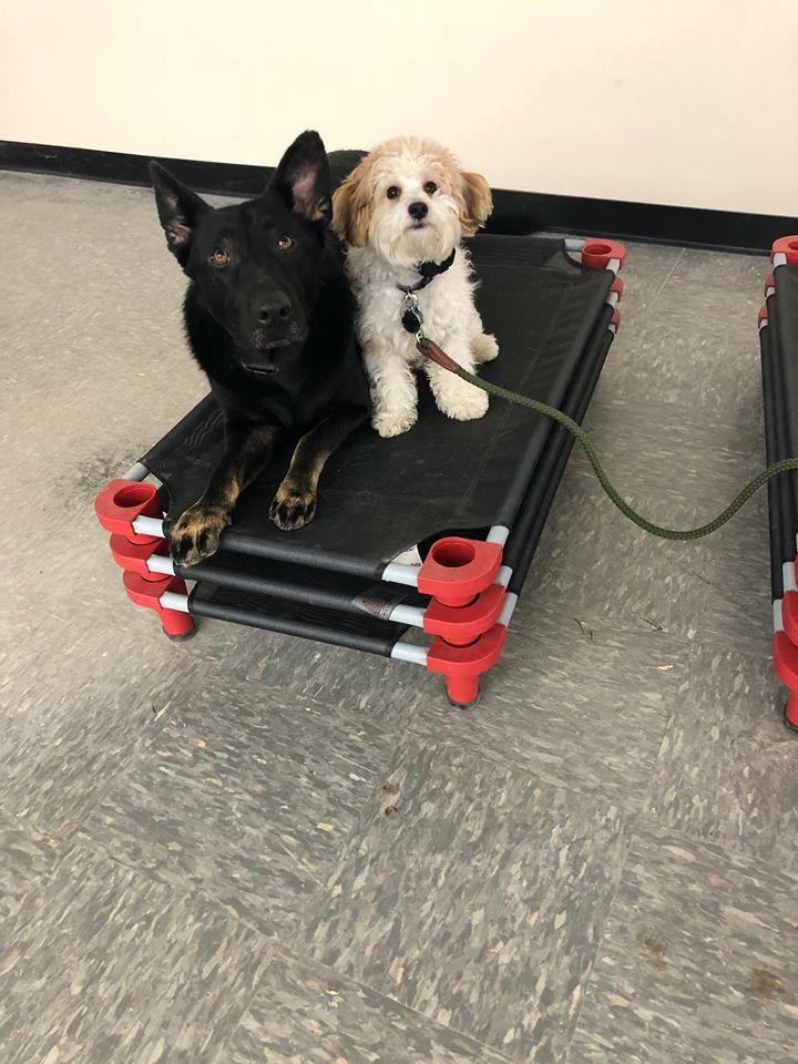 Dog Training Toledo Ohio Dog Training Puppy Obedience Classes Dogs