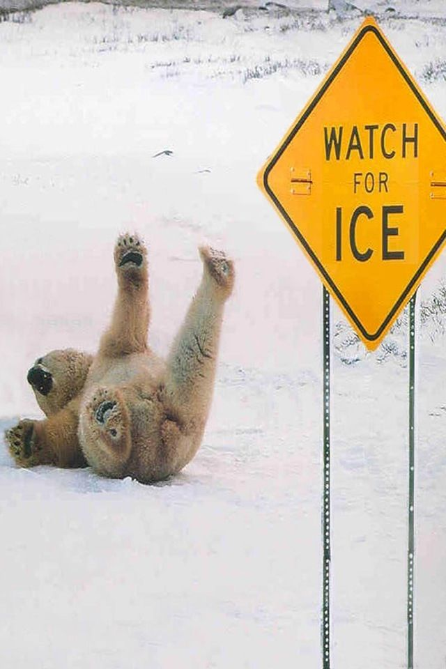 Whoops I slipped on the ice                                                                                                                                                                                 More
