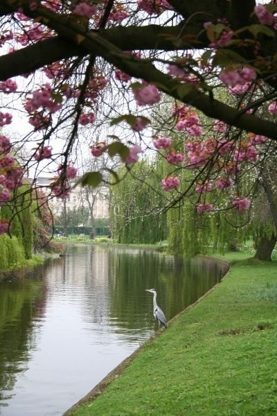 Regent's Park, London I LIVED TWO BLOCKS FROM THIS FOR THREE MONTHS I WALKED HERE EVERY DAY