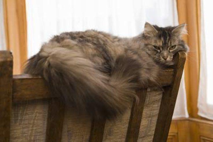 Cat Hair Loss Home Remedies | Cuteness.com