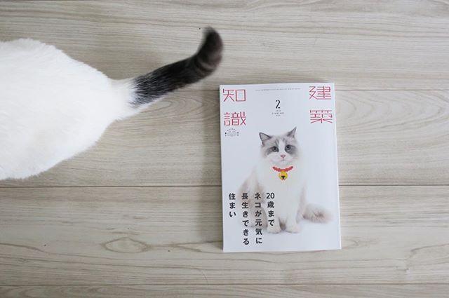 この本すごく勉強になります◯大掛かりな施工が今のお家で実現可能かどうかは置いといて、、改めて、ねこの生態を理解したうえで住まいや住まい方を見直すというのも必要だなーと^ ^  #ねこのいる生活 #猫と暮らす #猫との暮らし #愛猫 #マンチカン #cats #catlover #instagood #instacat #catstagram #catsofinstagram #munchkin #neko #nekostagram #munchkinlovers