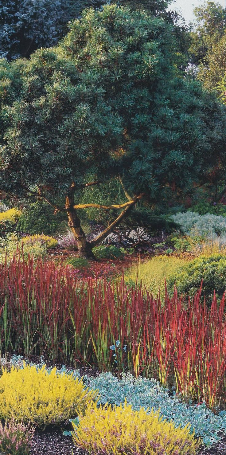 Japanese Blood Grass Forms A Planted River Adrian Bloom