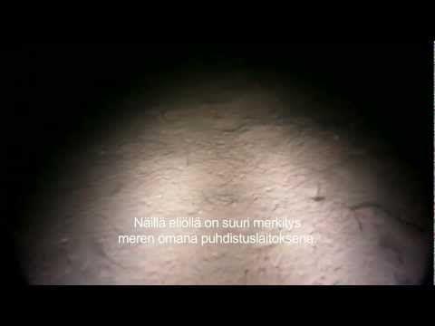 Itämeri, UNDER YTAN - PINNAN ALLA - BELOW THE SURFACE