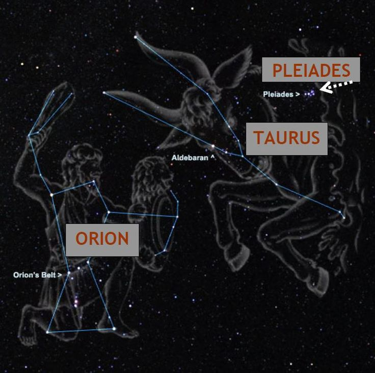 Pleadian Intl Starseed Network Astral Maps