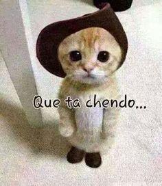 Hola Chechu:::como estas