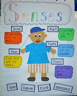 My Five Senses Anchor Chart