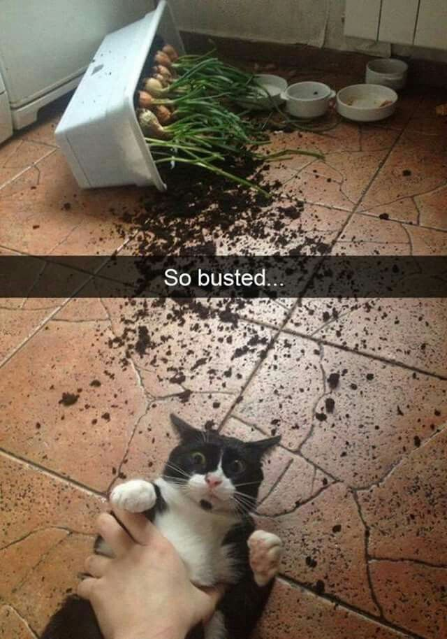 329 best memes for days images on pinterest funny animal funny 329 best memes for days images on pinterest funny animal funny animal pics and funny animals sciox Image collections
