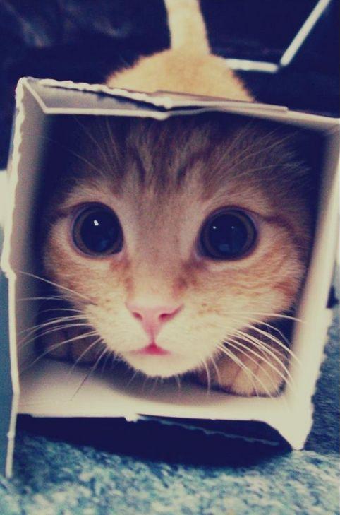 Immagine di cat, cute, and animal