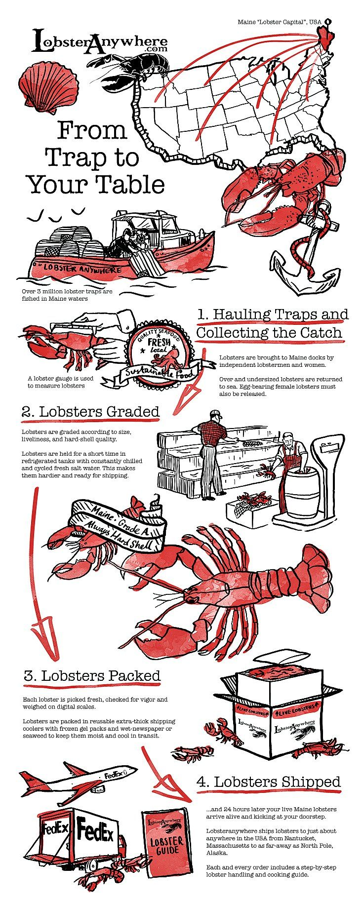 Looking for a good lobster deal? Ask for a cull, lobsters missing one claw. Culls are good for a recipe calling for cooked lobster meat [Lobster Recipes, Lobster, Fresh Seafood, Lobster Tail] https://lobsteranywhere.com Live Maine lobster delivery direct from LobsterAnywhere. New England's mail order premium seafood company online since 1999 with ocean fresh and frozen lobster on sale for your business or special event. Guaranteed overnight USA. Orders guaranteed. #Lobster #Recipe #Seafood