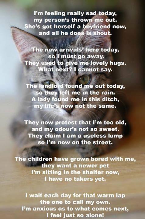 Sad poem about a rejected cat. | Quotes | Pinterest | Cats ...